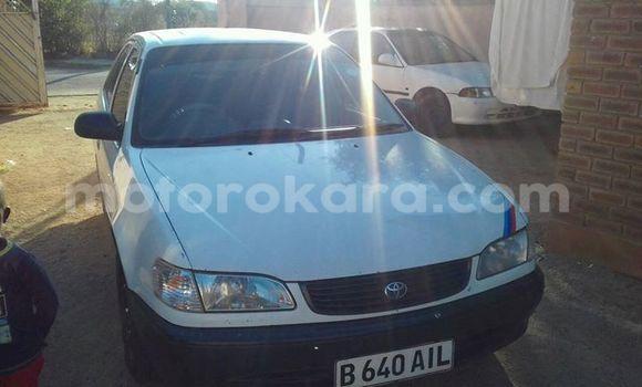 Buy Toyota Corolla White Car in Broadhurst in Gaborone
